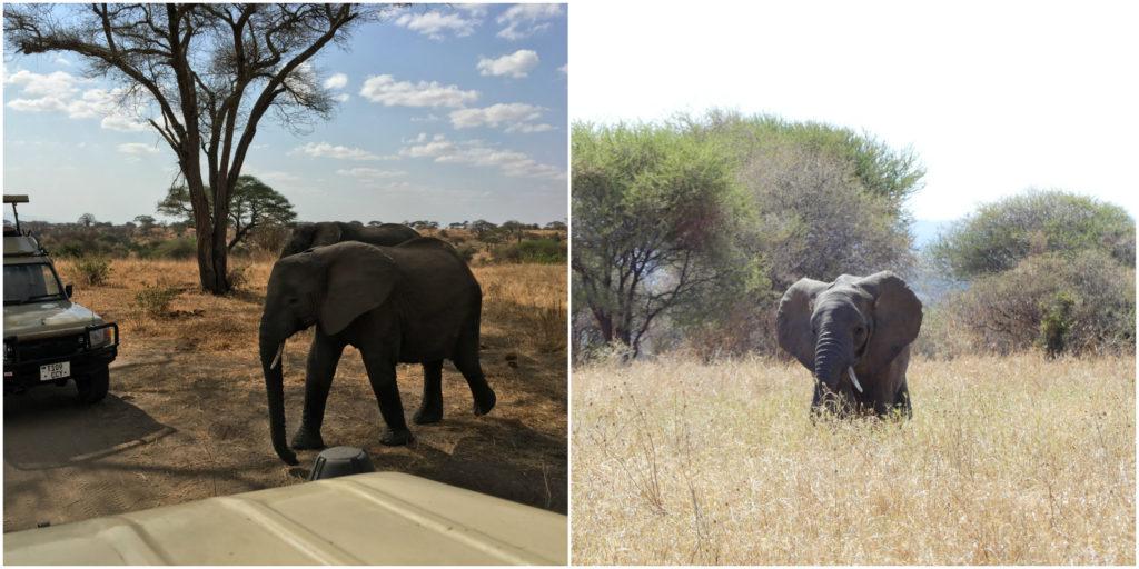 Tarangire Elephants - Near and Far!