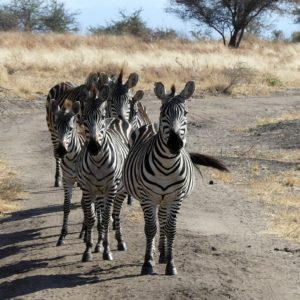 African Massage & The Game Drive Experience