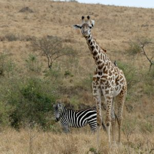 The Game Drive Experience: Part 2