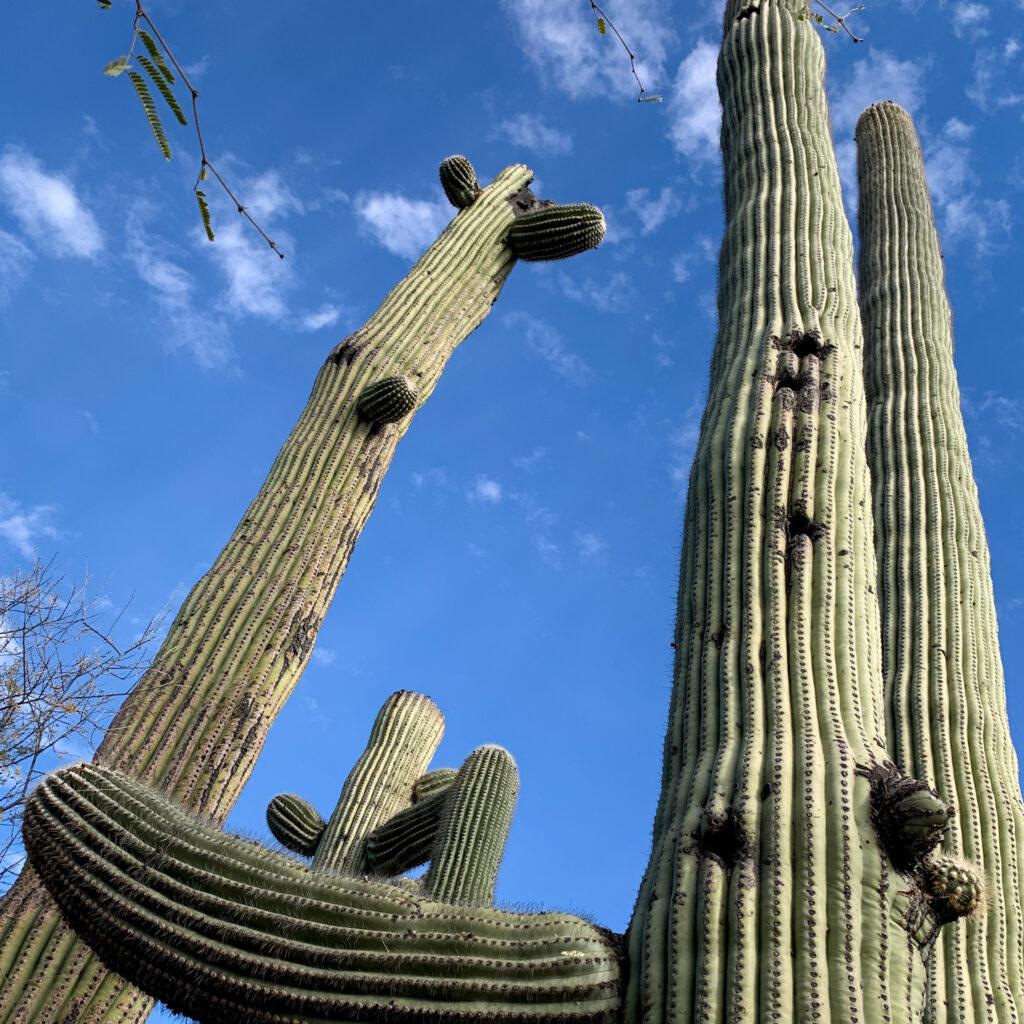 Canyon Ranch Tucson Saguaro
