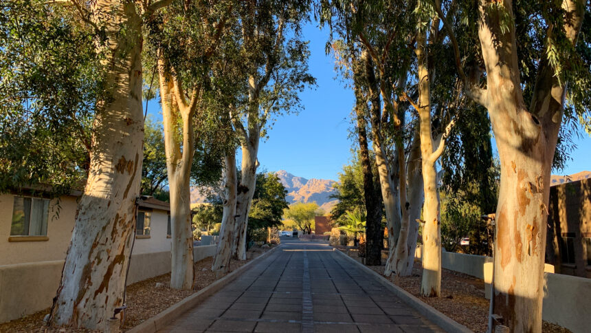 Hotel Review: Canyon Ranch, Tucson